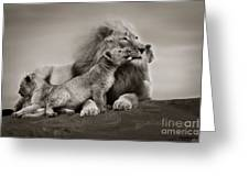Lions In Freedom Greeting Card
