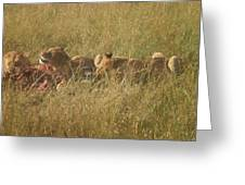lions in the Maasai Mara park in kenya Greeting Card