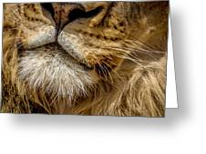Lions Mouth 2 Greeting Card