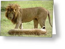 Lions On The Masai Mara Greeting Card