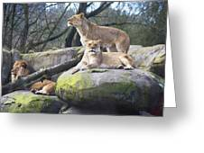 Lions Posing Greeting Card