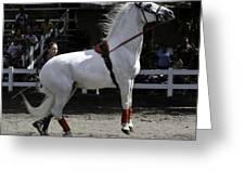 Lipizzaner Stallion Jumping Greeting Card