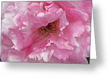 Lips Of A Rose Greeting Card