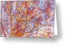 Liquidambar Square Abstract Greeting Card