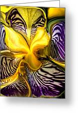 Liquified Orchid Greeting Card