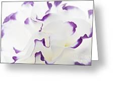 Lisianthus Frill Greeting Card