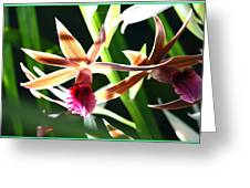 Lit Up Orchid Greeting Card