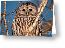 Lit Up Owl Greeting Card
