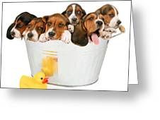 Litter Of Puppies In A Bathtub Greeting Card