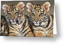 Little Angels Bengal Tigers Endangered Wildlife Rescue Greeting Card