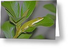 Little Anole At Sundown Greeting Card