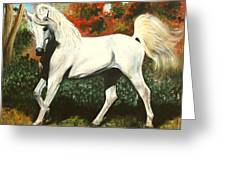 Little Arabian Greeting Card