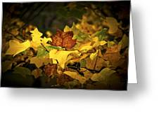 Little Autumn Colours Greeting Card