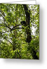 Little Bear Cub In Tree Cades Cove 2 Greeting Card