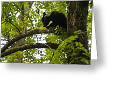 Little Bear Cub In Tree Cades Cove Greeting Card