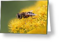 Little Bee Greeting Card