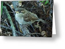 Little Bird Waiting Greeting Card