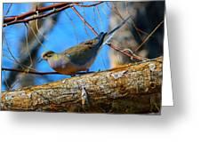 Little Birdie 2 Greeting Card