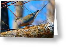 Little Birdie  Greeting Card