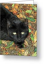 Little Black Cat In Fall Greeting Card