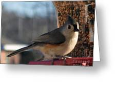 Little Gray Crested Titmouse Bird Ready For Lunch Greeting Card