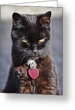 Little Black Kitty Greeting Card