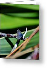 Little Blue Butterfly Greeting Card