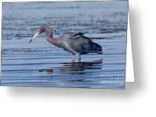 Little Blue Heron Egretta Caerulea Greeting Card