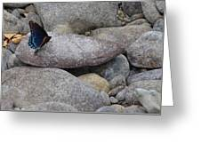 Little Blue Wings Greeting Card