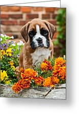 little Boxer Puppy in flowers Greeting Card by Doreen Zorn