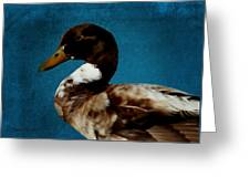 Little Brown Duck Greeting Card