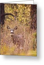 Little Buck Greeting Card
