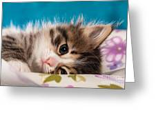 Little Cat Kitten Greeting Card