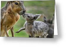 Little Cavy With Mother Greeting Card