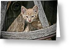 Little Charlie - Kitten By Wagon Wheel - Casper Wyoming Greeting Card
