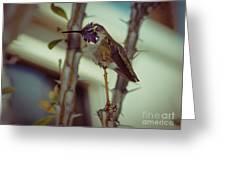 Little Costa's Hummingbird Greeting Card
