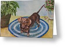 Little Dachshund Puppy Greeting Card