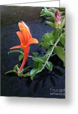 Little Dancing Dolphin Plant Greeting Card