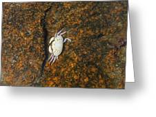 Little Dead Crab Under Water Greeting Card