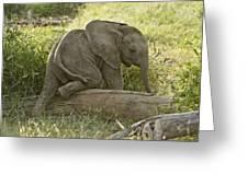 Little Elephant Big Log Greeting Card