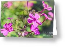 Little Flowers Greeting Card