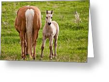 Little Foal Greeting Card