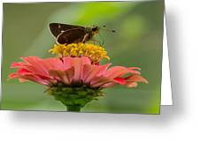 Little Glassywing Skipper Butterfly Greeting Card