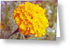 Little Golden  Marigold Greeting Card
