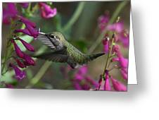 Little Happy Wings  Greeting Card