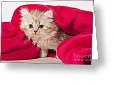 Little Kitten With Pink Blankie Greeting Card