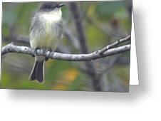Little Lady Eastern Kingbird Greeting Card