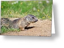 Little Marmots Greeting Card