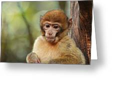 Little Monkey Greeting Card