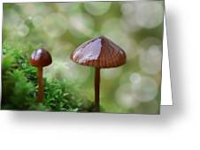Little Mushroom Reflections Greeting Card